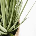 Focus plante artificielle herbe folle juncus