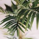 Focus palmier artificiel intérieur Oiko