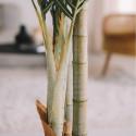 Focus tronc palmier artificiel Oiko