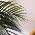 Focus palmier artificiel intérieur
