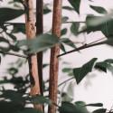 Ficus artificiel Oiko
