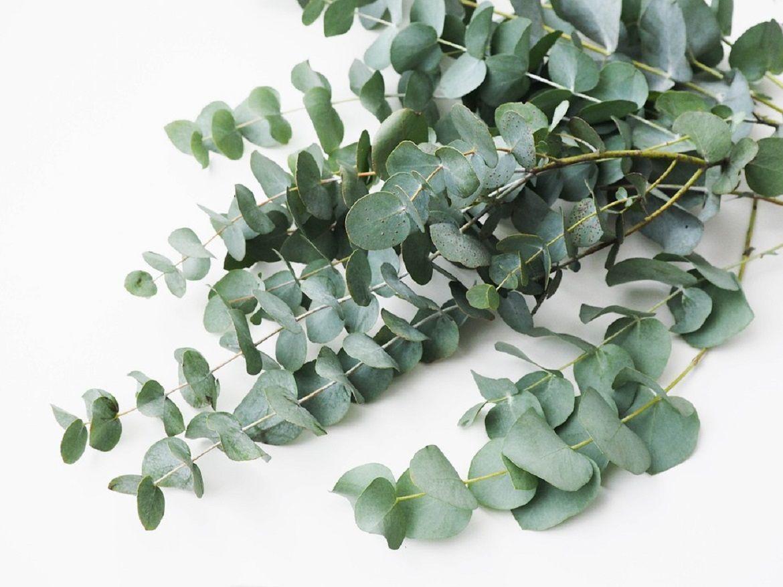 plante atrificielle Oviala