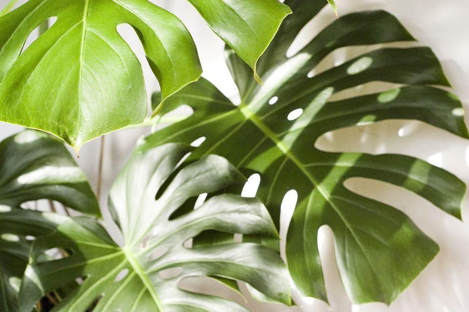 décoration jardin tropicale