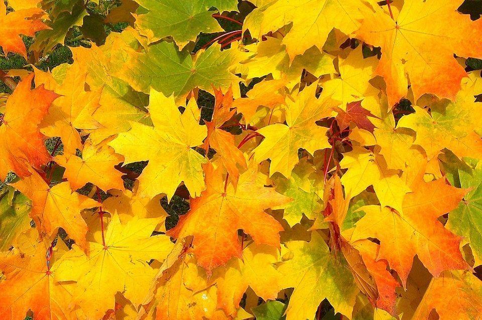 sac déchets verts feuilles mortes